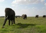 케냐 암보셀리 국립공원