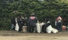 세계의 커피_파푸아뉴기니[3-1편]
