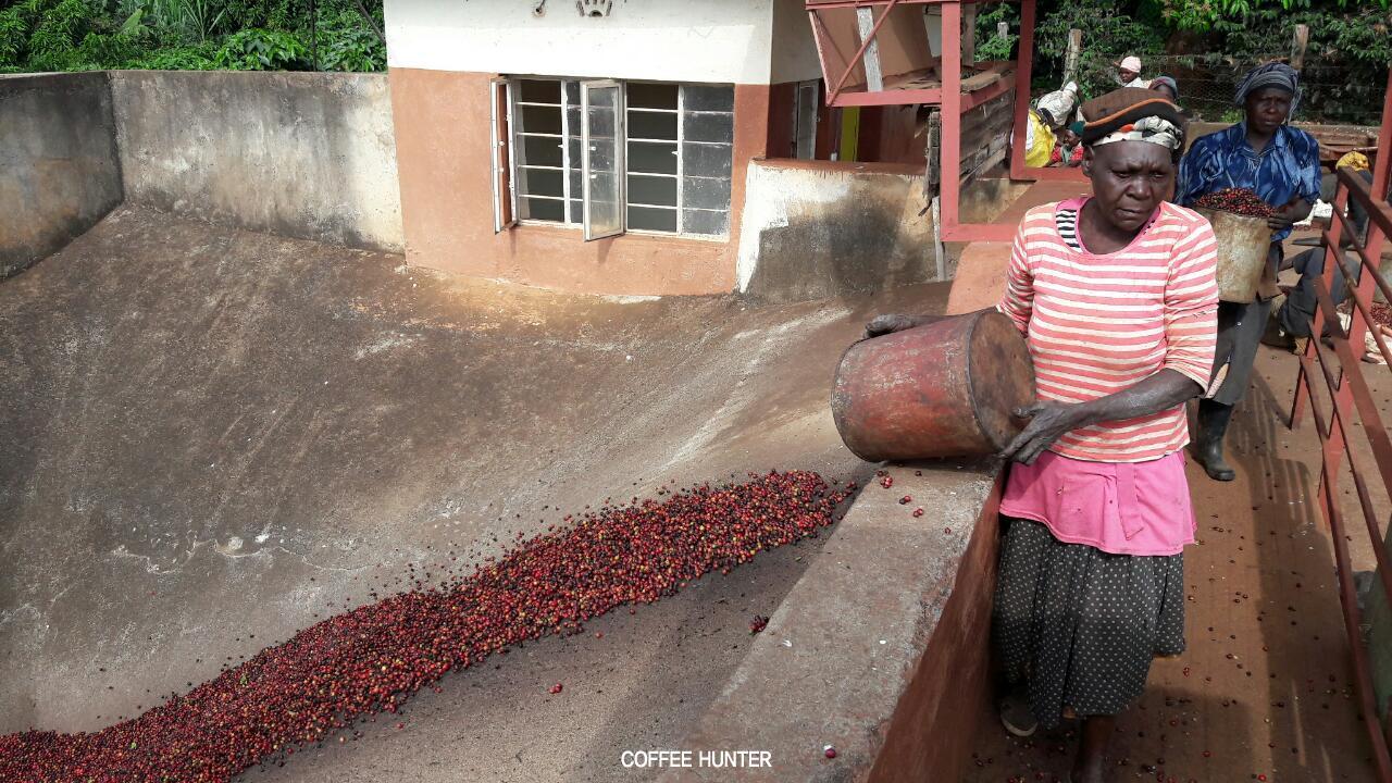 커피농부6.jpg