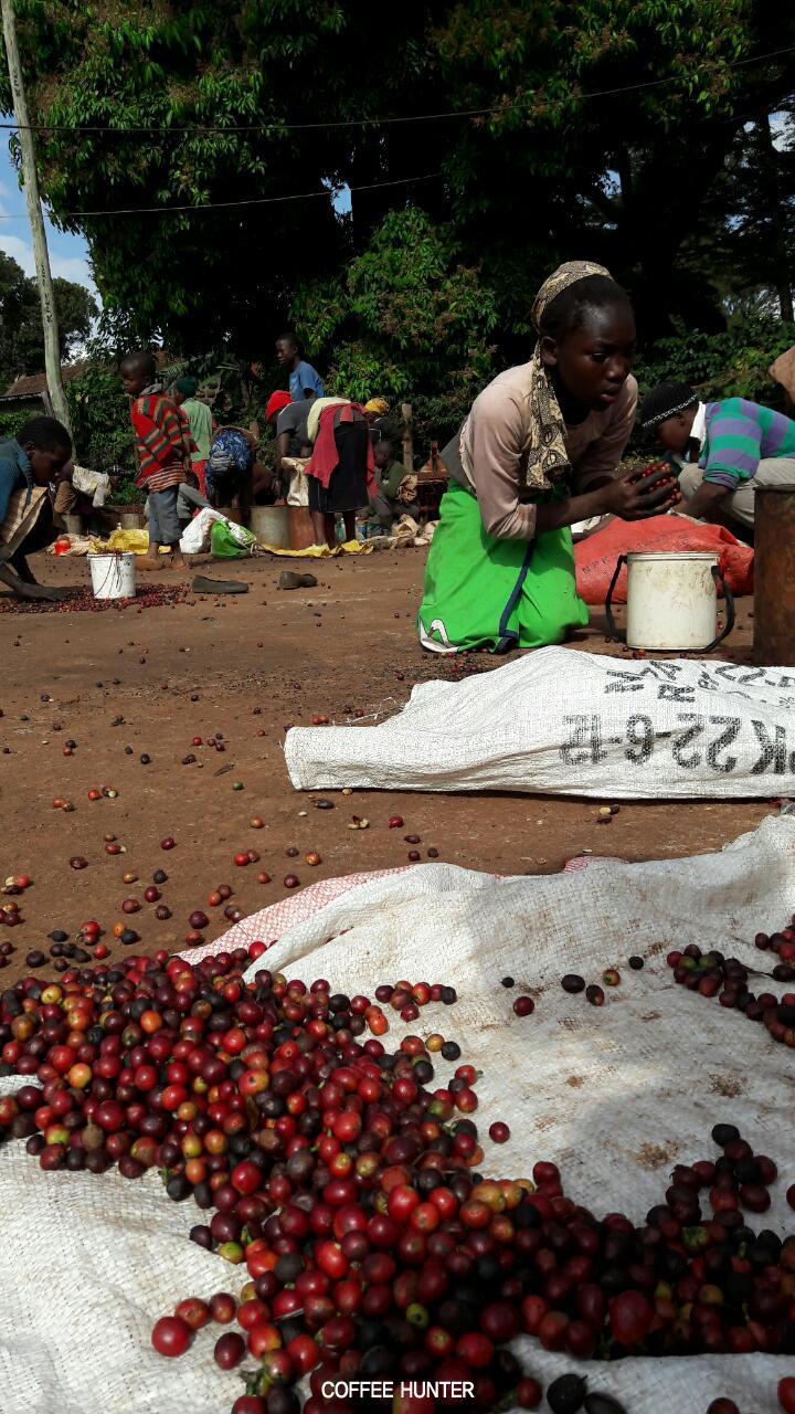 커피농부3.jpg