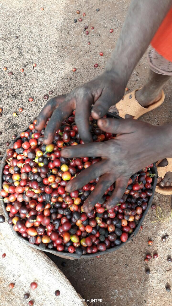 커피농부5.jpg